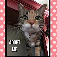 Adopt A Pet :: Monica - Arlington/Ft Worth, TX