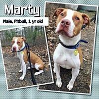 Adopt A Pet :: Urgent - Marty - Jackson, NJ