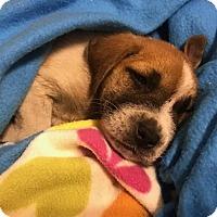 Adopt A Pet :: Athena - Charlotte, NC