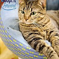 Adopt A Pet :: Mya - Alexandria, VA