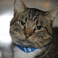 Adopt A Pet :: CLAPTON - Clayton, NJ