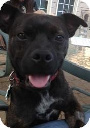 French Bulldog/Pug Mix Dog for adoption in Alpharetta, Georgia - Barney