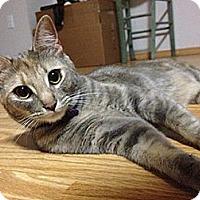 Adopt A Pet :: Lola - Anchorage, AK