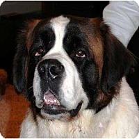 Adopt A Pet :: Dia - Palmyra, WI