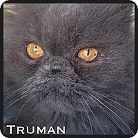 Adopt A Pet :: Truman - Beverly Hills, CA