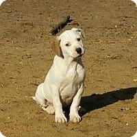 Adopt A Pet :: Athena - Marlton, NJ