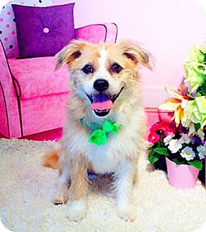 Terrier (Unknown Type, Small) Mix Dog for adoption in Castro Valley, California - Mao Mao