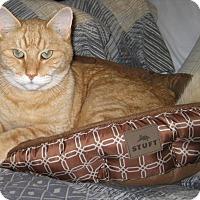 Adopt A Pet :: Freddy - Avon, NY