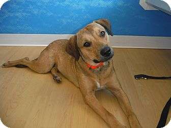 Shepherd (Unknown Type) Mix Dog for adoption in Palm City, Florida - DUNCAN