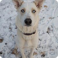 Adopt A Pet :: Mishka - Drumbo, ON
