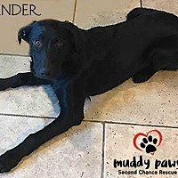 Adopt A Pet :: Zander (Courtesy Post) - Council Bluffs, IA