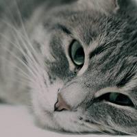 Adopt A Pet :: ZCL Willow - Horn Lake, MS