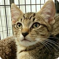 Adopt A Pet :: Ruben - Sarasota, FL