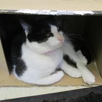 Adopt A Pet :: Tamara - Erie, PA