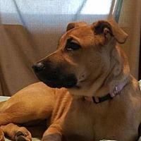Adopt A Pet :: Sadie - Lorain, OH