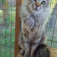 Adopt A Pet :: Maui - Minot, ND