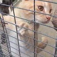Adopt A Pet :: Templeton - Fort Madison, IA