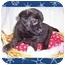 Photo 2 - Labrador Retriever Mix Puppy for adoption in Taylor Mill, Kentucky - Gracie