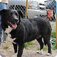 Adopt A Pet :: Sabrina - Tunica, MS