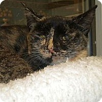 Adopt A Pet :: Mouse - Huntington, NY