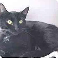 Adopt A Pet :: Chloe - Lunenburg, MA