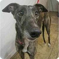 Adopt A Pet :: Markie (USS On the Mark) - Chagrin Falls, OH