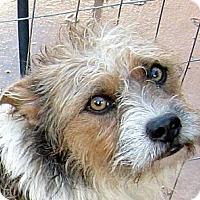 Adopt A Pet :: Ferguson - Oakley, CA