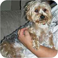 Adopt A Pet :: Ditka - Columbus, OH