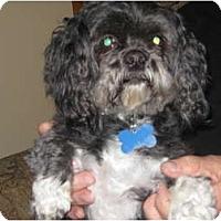 Adopt A Pet :: Dixie - Commerce City, CO