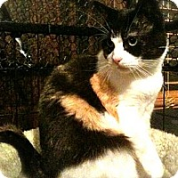 Adopt A Pet :: Leilah - Jersey City, NJ