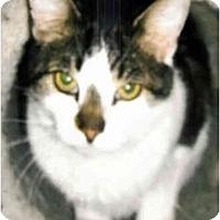 Adopt A Pet :: KC - Medway, MA
