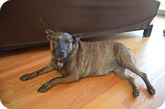 Australian Cattle Dog Mix Dog for adoption in Los Angeles, California - OINK