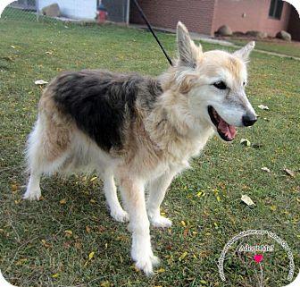 Shepherd (Unknown Type) Mix Dog for adoption in Sidney, Ohio - Cleopatra