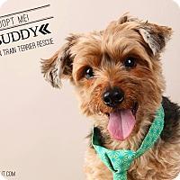 Adopt A Pet :: Buddy-Pending Adoption - Omaha, NE
