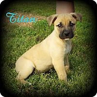 Adopt A Pet :: Titan - Denver, NC