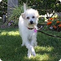 Adopt A Pet :: RUPERT - Newport Beach, CA