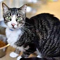 Adopt A Pet :: SMOKEY - West Palm Beach, FL