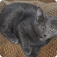 Adopt A Pet :: Ob Litter - Clare - Livonia, MI