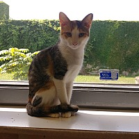 Adopt A Pet :: Antabella - Milwaukee, WI
