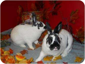 Other/Unknown Mix for adoption in Roseville, California - Faith & Oreo