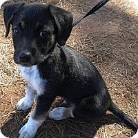 Adopt A Pet :: Kirby - Athens, GA