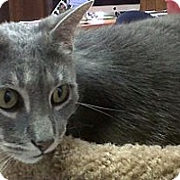 Adopt A Pet :: Lilly - Naples, FL