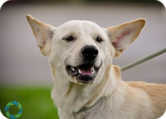 Shepherd (Unknown Type) Mix Dog for adoption in Gainesville, Florida - Kasey