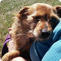 Adopt A Pet :: Misty - North Little Rock, AR