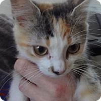 Adopt A Pet :: Dorothea - St. Louis, MO
