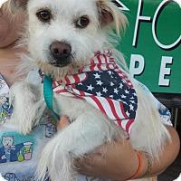 Adopt A Pet :: *URGENT* Einstein - Van Nuys, CA