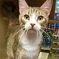 Adopt A Pet :: Nina - Garner, NC