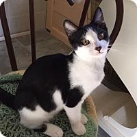 Adopt A Pet :: Sansa - Spencer, NY