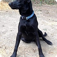 Adopt A Pet :: Hadley (Haddie) - Acworth, GA