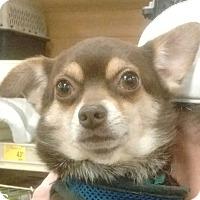 Adopt A Pet :: Patches - Newnan, GA